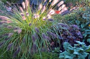 Morgenlicht in filigranen Gräsern