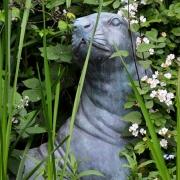 Seelöwen im Garten
