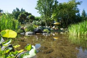 Biotop im Garten