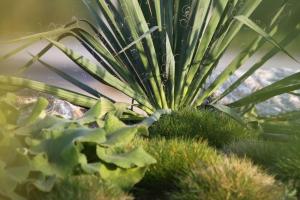 Struktur durch Pflanzen