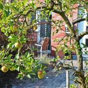 Üppige Obstgehölze