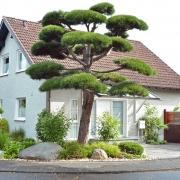 Formschnitt Vorgarten
