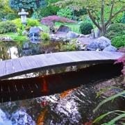 Koi Teich und Brücke
