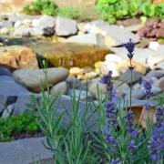 Lavendel aus der Provence