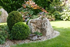 Buchsbaum in Form