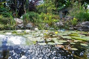 Quell im Teich