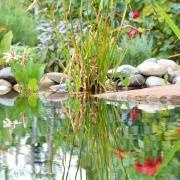 Teichidylle Steine Blüten