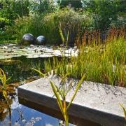 Wasserpflanzenidyll