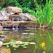 Goldfische und Wasserfall